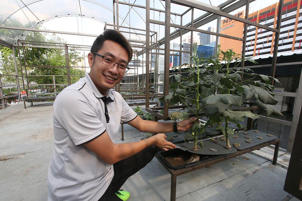 """为城市人创造家庭菜园.""""一盒农场""""体验种植乐"""